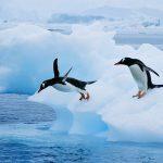 Pinguini: perché non volano? Qualche curiosità.