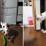 Perchè i gatti hanno paura dei cetrioli? Uno scherzo che sicuramente il tuo animale non gradirà.