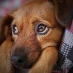 Animali domestici e dove trovarli: la guida agli animali da affezione